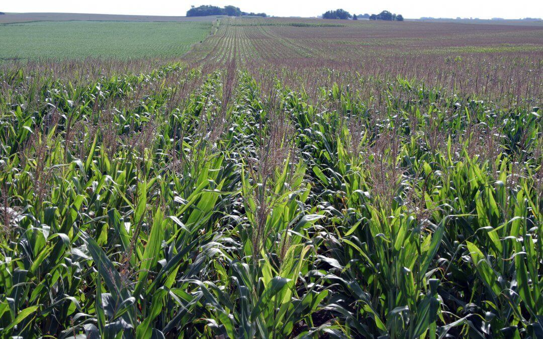 Agronomically Speaking: The Video Series